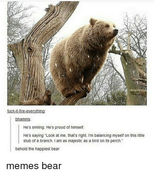 """Bears Memes: fuck-it-fire-everything  bhamms  He's smiling. He's proud of himself  He's saying """"Look at me, that's right, l'm balancing myself on this little  stub of a branch. am as majestic as a bird on its perch  behold the happiest bear memes bear"""