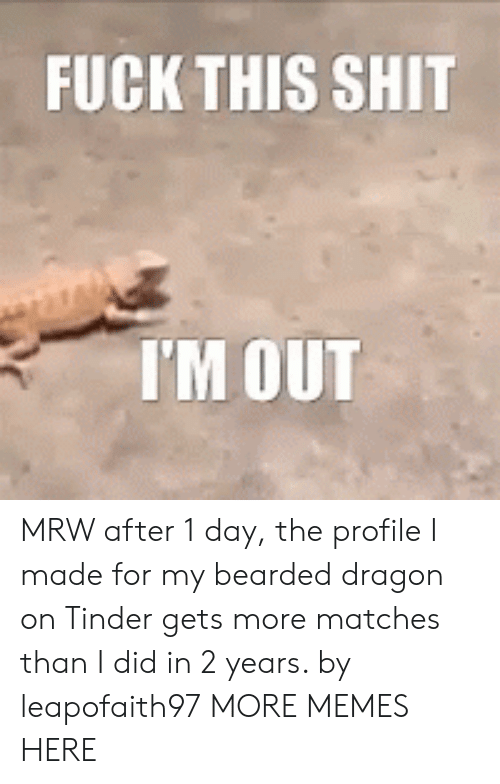 Bearded Dragon: FUCKTHIS SHIT  I'M OUT MRW after 1 day, the profile I made for my bearded dragon on Tinder gets more matches than I did in 2 years. by leapofaith97 MORE MEMES HERE