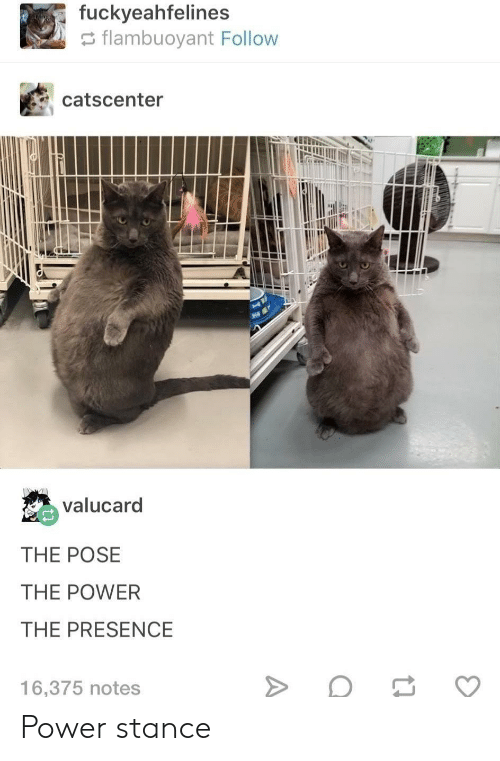 Power, Notes, and Presence: fuckyeahfelines  flambuoyant Follow  catscenter  valucard  THE POSE  THE POWER  THE PRESENCE  16,375 notes Power stance