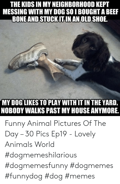 Of The Day: Funny Animal Pictures Of The Day – 30 Pics Ep19 - Lovely Animals World #dogmemeshilarious #dogmemesfunny #dogmemes #funnydog #dog #memes