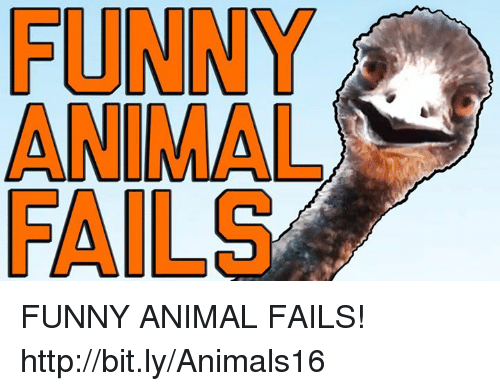 Fail, Fall, and Funny Animals: FUNNY  FALLS FUNNY ANIMAL FAILS! http://bit.ly/Animals16
