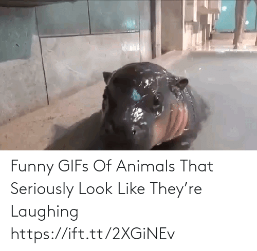 Look Like: Funny GIFs Of Animals That Seriously Look Like They're Laughing https://ift.tt/2XGiNEv