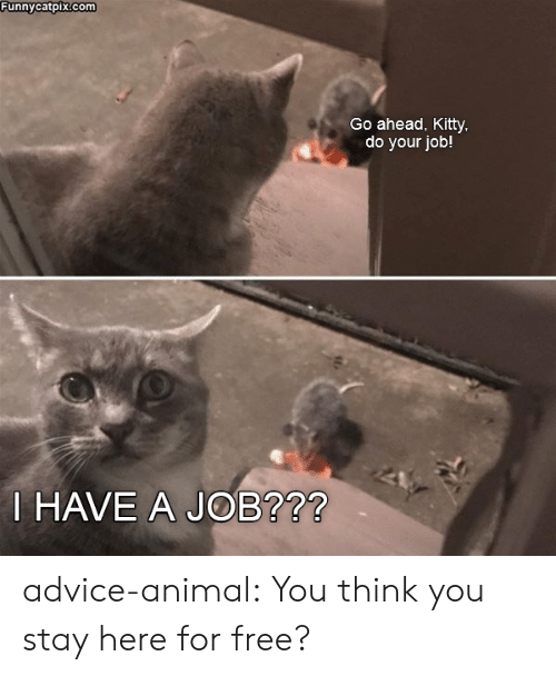 Advice Animal: Funnycatpix.com  Go ahead, Kitty  do your job!  HAVE A JOB?72 advice-animal:  You think you stay here for free?