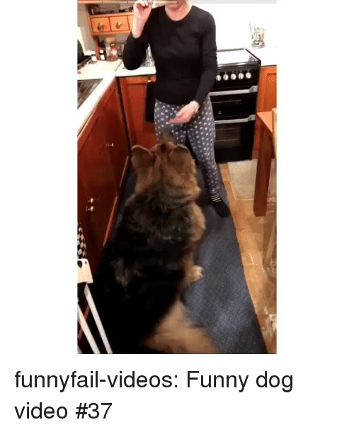 Funny, Tumblr, and Videos: funnyfail-videos:  Funny dog video #37