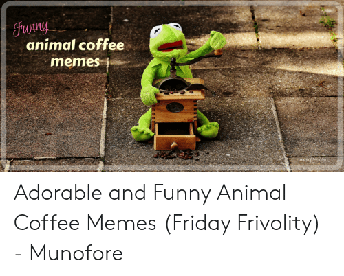 🐣 25+ Best Memes About Coffee Memes Friday | Coffee Memes Friday ... #spikedCoffeeQuotes