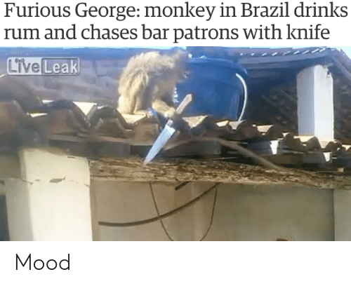 Mood, Brazil, and Monkey: Furious George: monkey in Brazil drinks  rum and chases bar patrons with knife Mood