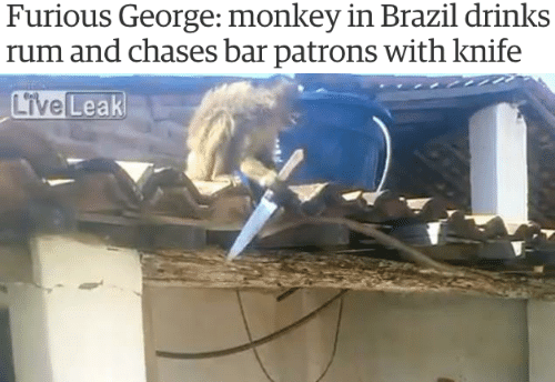 Brazil, Monkey, and Rum: Furious George: monkey in Brazil drinks  rum and chases bar patrons with knife