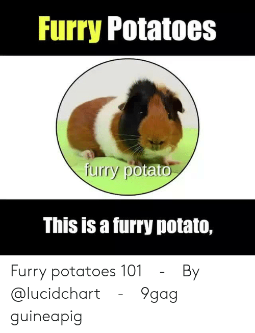 ato: furry Potatoes  uirry pot  ato  This is a furry potato, Furry potatoes 101⠀ -⠀ By @lucidchart⠀ -⠀ 9gag guineapig