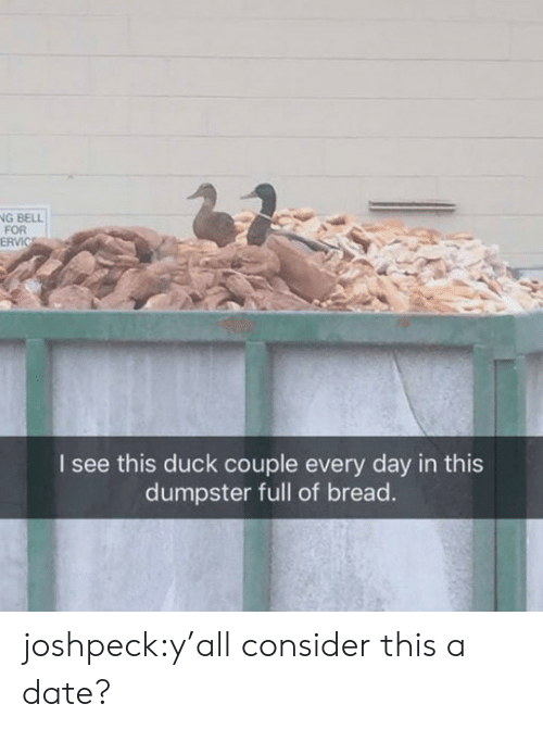 Ervic: G BELLİ  FOR  ERVIC  I see this duck couple every day in this  dumpster full of bread. joshpeck:y'all consider this a date?