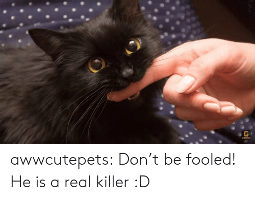 Tumblr, Blog, and Com: G  SUBSCRIBE awwcutepets:  Don't be fooled! He is a real killer :D