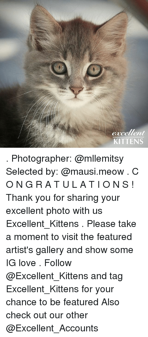 Meowe: G1  excellent  KITTENS . Photographer: @mllemitsy Selected by: @mausi.meow . C O N G R A T U L A T I O N S ! Thank you for sharing your excellent photo with us Excellent_Kittens . Please take a moment to visit the featured artist's gallery and show some IG love . Follow @Excellent_Kittens and tag Excellent_Kittens for your chance to be featured Also check out our other @Excellent_Accounts