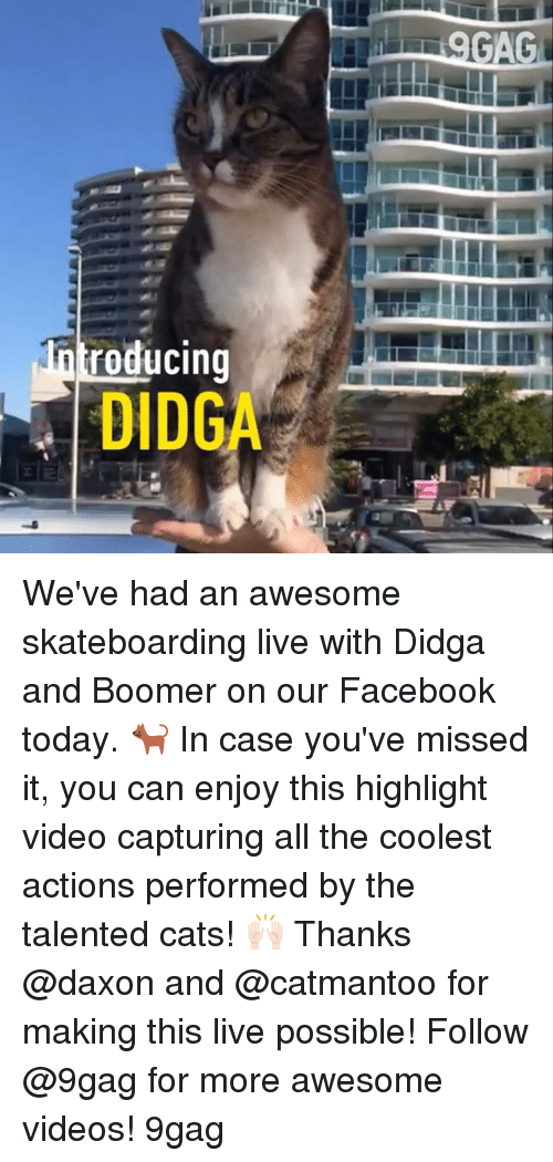 gagging: GAG  roducing  DIDGA We've had an awesome skateboarding live with Didga and Boomer on our Facebook today. 🐈 In case you've missed it, you can enjoy this highlight video capturing all the coolest actions performed by the talented cats! 🙌🏻 Thanks @daxon and @catmantoo for making this live possible! Follow @9gag for more awesome videos! 9gag