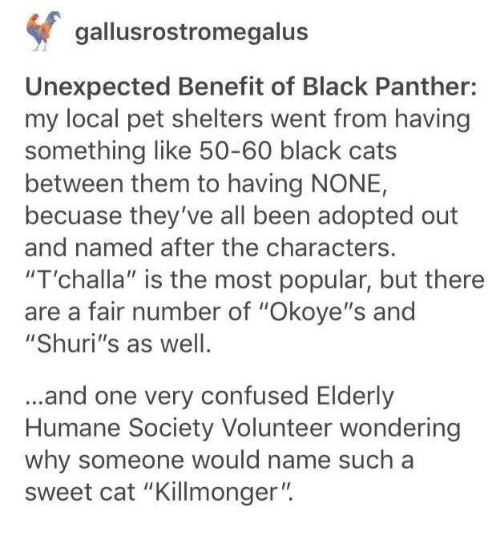 "Cats, Confused, and Black: gallusrostromegalus  Unexpected Benefit of Black Panther:  my local pet shelters went from having  something like 50-60 black cats  between them to having NONE,  becuase they've all been adopted out  and named after the characters.  ""T'challa"" is the most popular, but there  are a fair number of ""Okoye""s and  ""Shuri's as well  ...and one very confused Elderly  Humane Society Volunteer wondering  why someone would name such a  sweet cat ""Killmonger"""