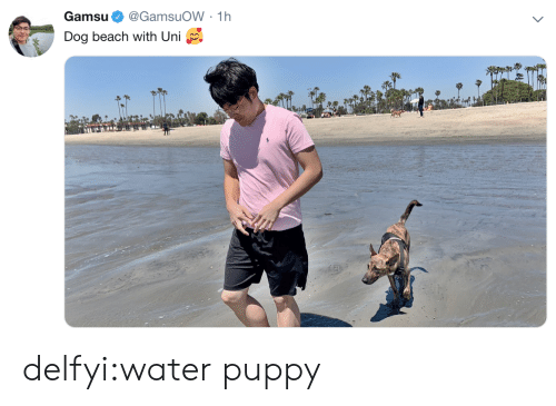 Tumblr, Beach, and Blog: Gamsu@GamsuoW 1h  Dog beach with Uni delfyi:water puppy