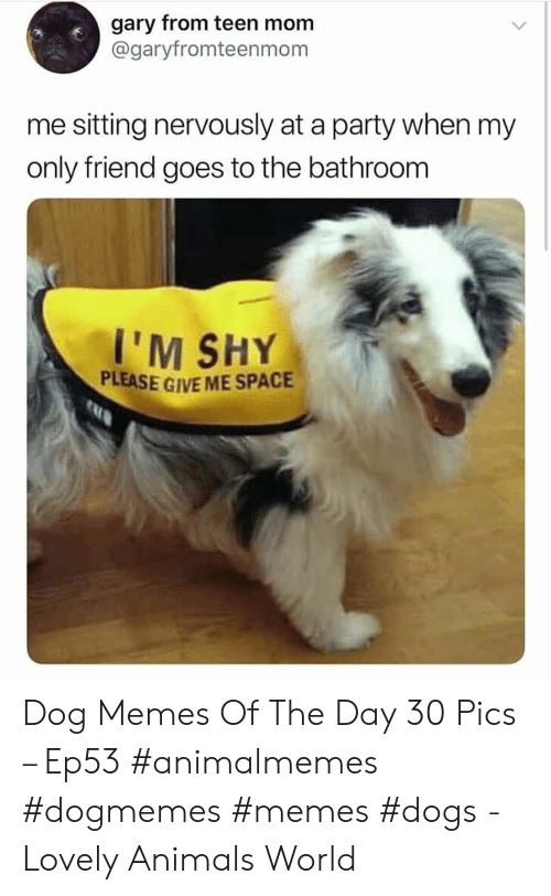 Give Me Space: gary from teen mom  @garyfromteenmom  me sitting nervously at a party when my  only friend goes to the bathroom  I'M SHY  PLEASE GIVE ME SPACE Dog Memes Of The Day 30 Pics – Ep53 #animalmemes #dogmemes #memes #dogs - Lovely Animals World