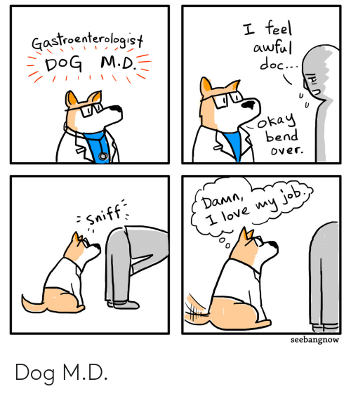 Love My Job: Gastroenterologist  DoG M.D.  I feel  awful  doc...  okay  bend  Over.  Damn,  - Sniff  I love my job  seebangnow Dog M.D.