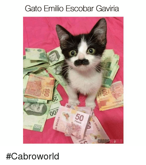 Memes, 🤖, and Escobar: Gato Emilio Escobar Gaviria  007 #Cabroworld