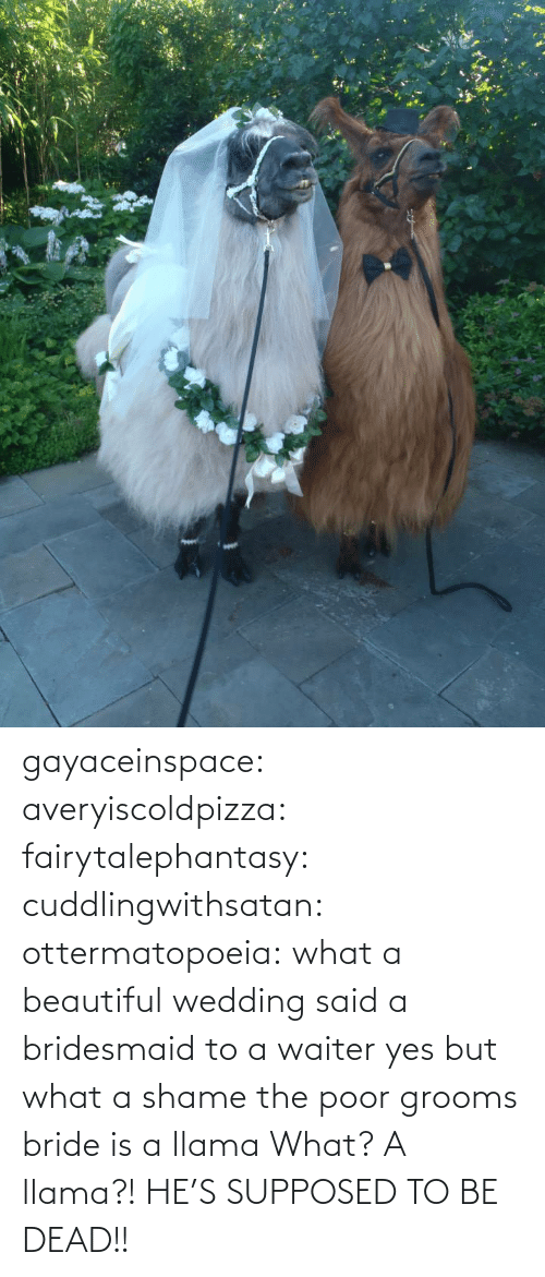 bride: gayaceinspace: averyiscoldpizza:  fairytalephantasy:  cuddlingwithsatan:  ottermatopoeia:  what a beautiful wedding  said a bridesmaid to a waiter  yes but what a shame  the poor grooms bride is a llama  What? A llama?! HE'S SUPPOSED TO BE DEAD!!