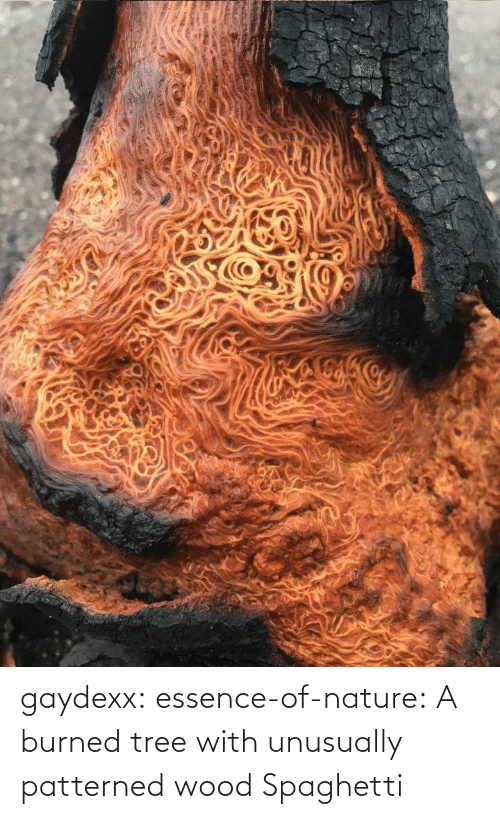 Essence: gaydexx: essence-of-nature:   A burned tree with unusually patterned wood    Spaghetti