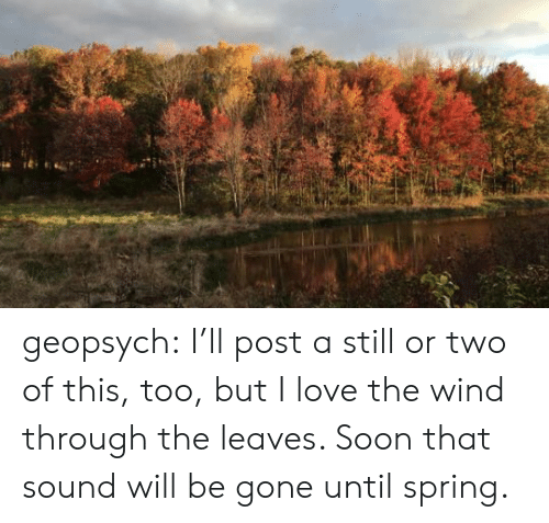 Love, Soon..., and Target: geopsych: I'll post a still or two of this, too, but I love the wind through the leaves. Soon that sound will be gone until spring.