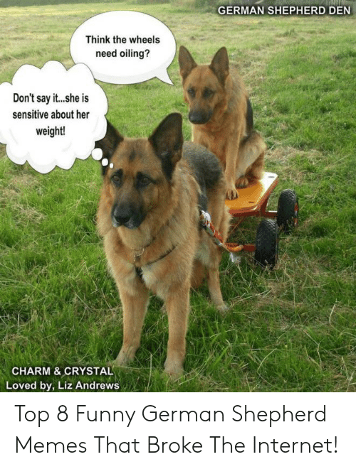 Funny, Internet, and Memes: GERMAN SHEPHERD DEN  Think the wheels  need oiling?  Don't say it...she is  sensitive about her  weight!  CHARM & CRYSTAL  Loved by, Liz Andrews Top 8 Funny German Shepherd Memes That Broke The Internet!