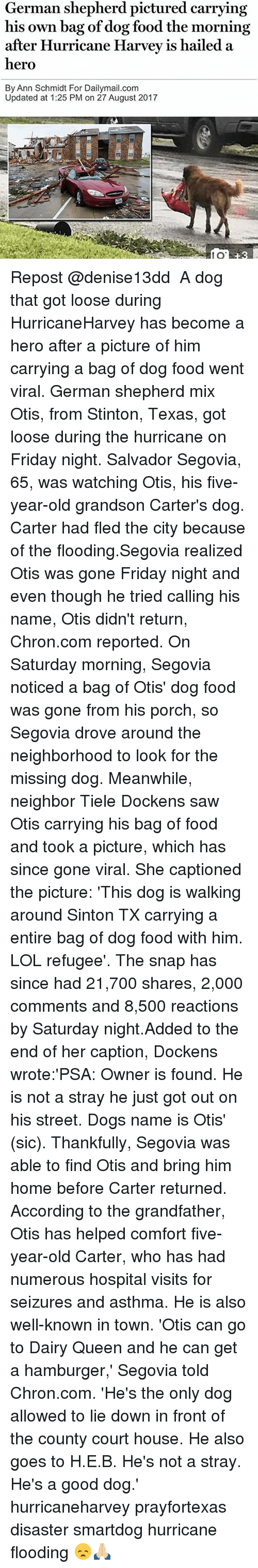 germane: German shepherd pictured carrying  his own bag of dog food the morning  after Hurricane Harvev is hailed a  hero  By Ann Schmidt For Dailymail.com  Updated at 1:25 PM on 27 August 2017  80  8 Repost @denise13dd ・・・ A dog that got loose during HurricaneHarvey has become a hero after a picture of him carrying a bag of dog food went viral. German shepherd mix Otis, from Stinton, Texas, got loose during the hurricane on Friday night. Salvador Segovia, 65, was watching Otis, his five-year-old grandson Carter's dog. Carter had fled the city because of the flooding.Segovia realized Otis was gone Friday night and even though he tried calling his name, Otis didn't return, Chron.com reported. On Saturday morning, Segovia noticed a bag of Otis' dog food was gone from his porch, so Segovia drove around the neighborhood to look for the missing dog. Meanwhile, neighbor Tiele Dockens saw Otis carrying his bag of food and took a picture, which has since gone viral. She captioned the picture: 'This dog is walking around Sinton TX carrying a entire bag of dog food with him. LOL refugee'. The snap has since had 21,700 shares, 2,000 comments and 8,500 reactions by Saturday night.Added to the end of her caption, Dockens wrote:'PSA: Owner is found. He is not a stray he just got out on his street. Dogs name is Otis' (sic). Thankfully, Segovia was able to find Otis and bring him home before Carter returned. According to the grandfather, Otis has helped comfort five-year-old Carter, who has had numerous hospital visits for seizures and asthma. He is also well-known in town. 'Otis can go to Dairy Queen and he can get a hamburger,' Segovia told Chron.com. 'He's the only dog allowed to lie down in front of the county court house. He also goes to H.E.B. He's not a stray. He's a good dog.' hurricaneharvey prayfortexas disaster smartdog hurricane flooding 😞🙏🏼