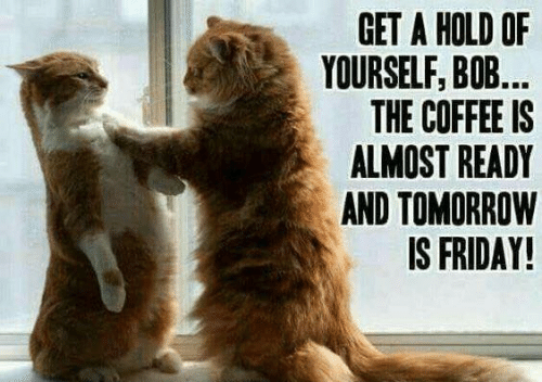 Dank, Friday, and Coffee: GET A HOLD OF  YOURSELF, BO...  THE COFFEE IS  ALMOST READY  AND TOMORROW  IS FRIDAY!