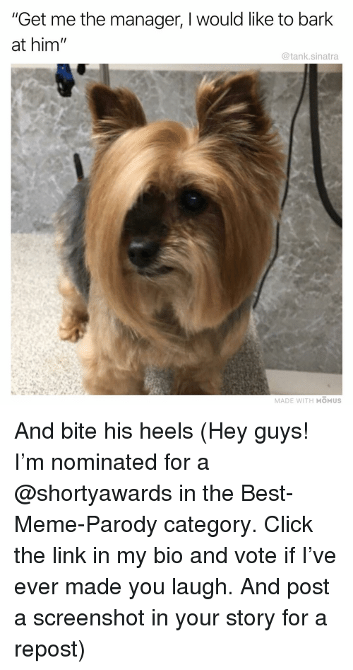 "heels: ""Get me the manager, I would like to bark  at him  @tank.sinatra  MADE WITH MOMUS And bite his heels (Hey guys! I'm nominated for a @shortyawards in the Best-Meme-Parody category. Click the link in my bio and vote if I've ever made you laugh. And post a screenshot in your story for a repost)"