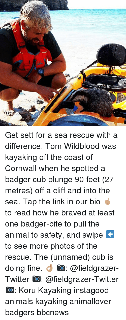 badger: Get sett for a sea rescue with a difference. Tom Wildblood was kayaking off the coast of Cornwall when he spotted a badger cub plunge 90 feet (27 metres) off a cliff and into the sea. Tap the link in our bio ☝🏽 to read how he braved at least one badger-bite to pull the animal to safety, and swipe ⬅️ to see more photos of the rescue. The (unnamed) cub is doing fine. 👌🏽 📷: @fieldgrazer-Twitter 📷: @fieldgrazer-Twitter 📷: Koru Kayaking instagood animals kayaking animallover badgers bbcnews