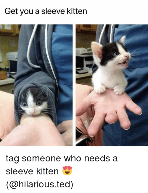Memes, Ted, and Tag Someone: Get you a sleeve kitten tag someone who needs a sleeve kitten 😍 (@hilarious.ted)