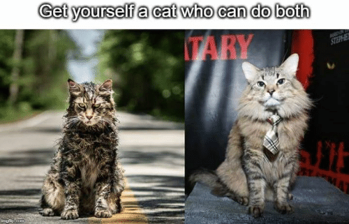 Memes, Who Can Do Both, and 🤖: Get yourselfa cat who can do both  TARY