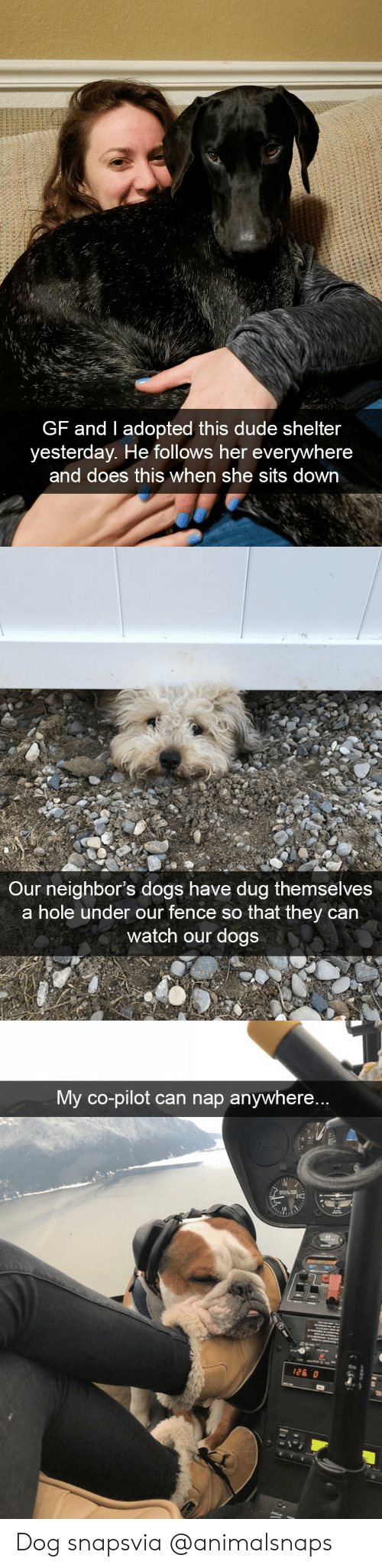Pilots: GF and I adopted this dude shelter  yesterday. He follows her everywhere  and does this when she sits down   Our neighbor's dogs have dug themselves  a hole under our fence so that they can  watch our dogs   My co-pilot can nap anywhere...  ON Dog snapsvia @animalsnaps