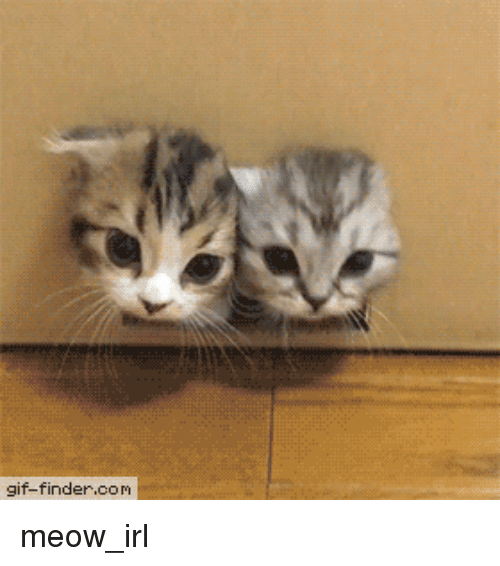 Gif, Irl, and Cat IRL: gif-finder.com meow_irl