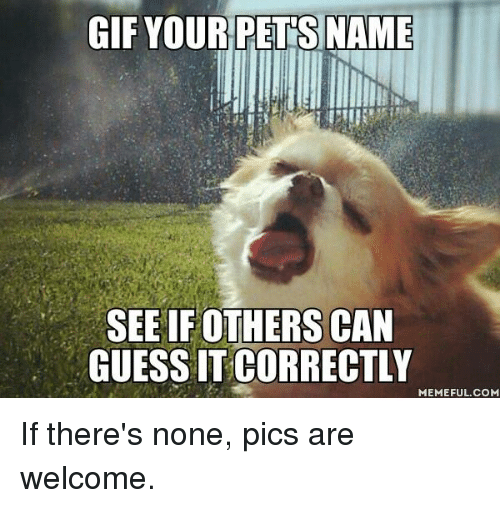 Dank, Gif, and Guess: GIF YOURPETS NAME  SEE IF OTHERS CAN  GUESS IT CORRECTLY  MEMEFUL.COM If there's none, pics are welcome.