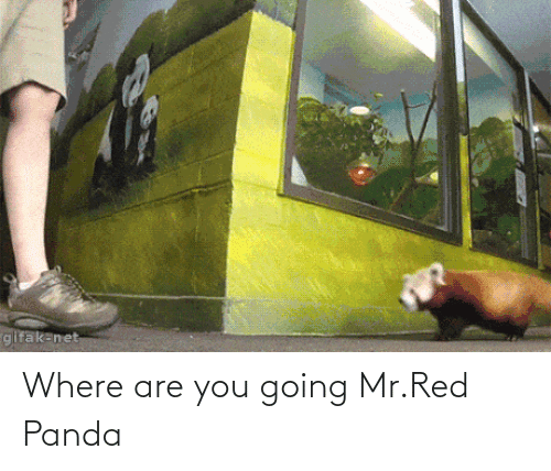 where are you: gifak-net Where are you going Mr.Red Panda