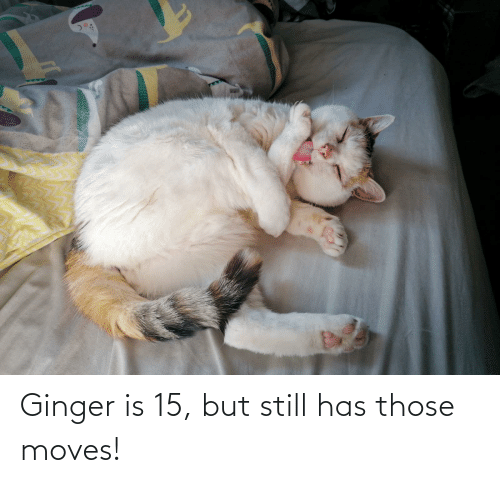 ginger: Ginger is 15, but still has those moves!