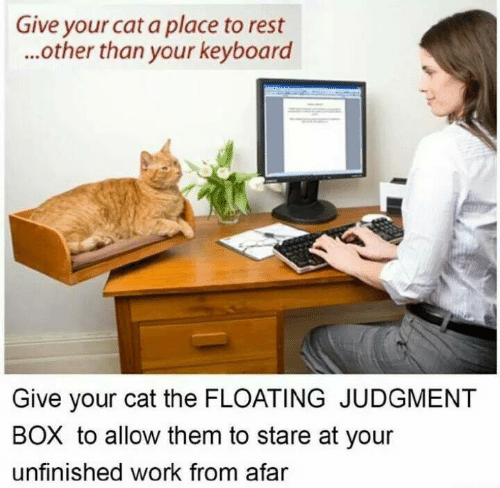 Memes, Work, and Keyboard: Give your cat a place to rest  ...other than your keyboard  Give your cat the FLOATING JUDGMENT  BOX to allow them to stare at your  unfinished work from afar