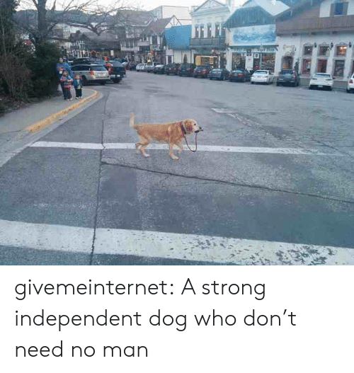 Target, Tumblr, and Blog: givemeinternet:  A strong independent dog who don't need no man
