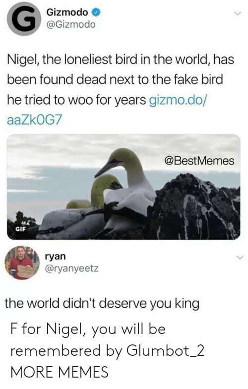 Gizmodo: Gizmodo  @Gizmodo  Nigel, the loneliest bird in the world, has  been found dead next to the fake bird  he tried to woo for years gizmo.do/  aaZkOG7  @BestMemes  GIF  ryan  @ryanyeetz  the world didn't deserve you king F for Nigel, you will be remembered by Glumbot_2 MORE MEMES