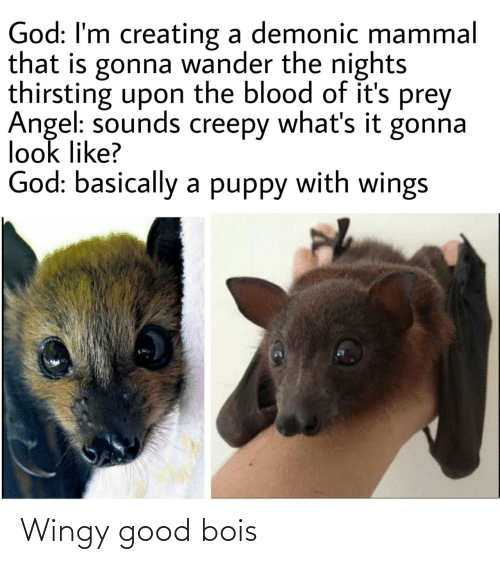 Creepy: God: I'm creating a demonic mammal  that is gonna wander the nights  thirsting upon the blood of it's prey  Angel: sounds creepy what's it gonna  look like?  God: basically a puppy with wings Wingy good bois