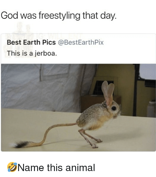 freestyling: God was freestyling that day.  Best Earth Pics @BestEarthPix  This is a jerboa 🤣Name this animal