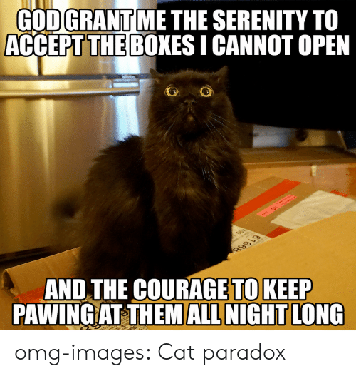 Omg, Tumblr, and Blog: GODGRANT ME THE SERENITY TO  ACCEPT THE BOXES I CANNOT OPEN  THE COURAGE TO KEEP  AND  PAWING AT THEM ALL NIGHT LONG omg-images:  Cat paradox