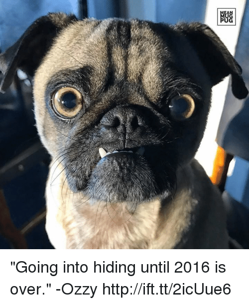 """Memes, 🤖, and Ozzy: """"Going into hiding until 2016 is over."""" -Ozzy http://ift.tt/2icUue6"""