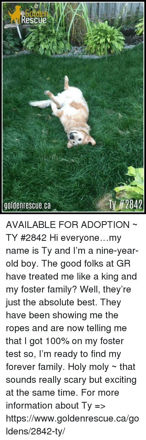 Anaconda, Family, and Memes: Golde  Rescu  About Second  goldenrescue.ca  Ty AVAILABLE FOR ADOPTION ~ TY #2842  Hi everyone…my name is Ty and I'm a nine-year-old boy.  The good folks at GR have treated me like a king and my foster family?  Well, they're just the absolute best.  They have been showing me the ropes and are now telling me that I got 100% on my foster test so, I'm ready to find my forever family.  Holy moly ~ that sounds really scary but exciting at the same time.    For more information about Ty => https://www.goldenrescue.ca/goldens/2842-ty/