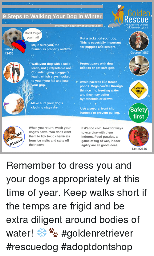 Bodies , Dogs, and Fall: Golden  9 Steps to Walking Your Dog in WinterRescue  Information courtesy of vetstreet.com  i...About Second Chances  goldenrescue.ca  Don't forget  your hat!  Put a jacket ori your dog.  This is especially important  for puppies and seniors..  Make sure you, the  human, is properly outfitted  Farley  #2435  George #682  Walk your dog with a solid Protect paws with dog  leash, not a retractable one. booties or pet safe gels.  Consider uşing a joggers  leash, which stays hooked  to you if you fall and-lose Avoid hazards like frozen  our grip.  ponds. Dogs can fall through  thin ice into freežing water  and they may suffer  hypothermia or drown.  DANGER  THIN  ICE  Make sure your dog's  clothing stays dry.  Use a seeure, front clip  harness to prevent pulling.  Safety  When you return, wash your  If it's too cold, look for ways  to exercise with them  indoors. Food puzzles, a  game of tug of war, indoor  agility are all good ideas.  e  eun  dogs's paws. You don't want  them to lick toxic chemicals  from ice melts and salts off  their paws  Les Remember to dress you and your dogs appropriately at this time of year. Keep walks short if the temps are frigid and be extra diligent around bodies of water! ❄️🐾  #goldenretriever #rescuedog #adoptdontshop