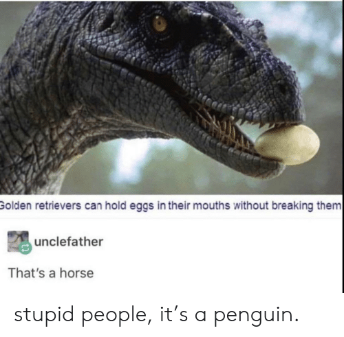 Horse, Penguin, and Can: Golden retrievers can hold eggs in their mouths without breaking them  unclefather  That's a horse stupid people, it's a penguin.