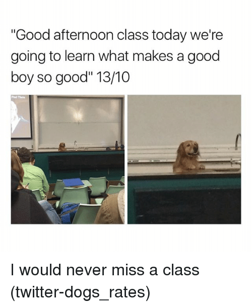 "Dogs, Funny, and Twitter: ""Good afternoon class today we're  going to learn what makes a good  boy so good"" 13/10 I would never miss a class (twitter-dogs_rates)"