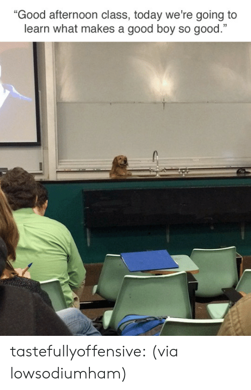 """Reddit, Target, and Tumblr: """"Good afternoon class, today we're going to  learn what makes a good boy so good."""" tastefullyoffensive:  (via lowsodiumham)"""