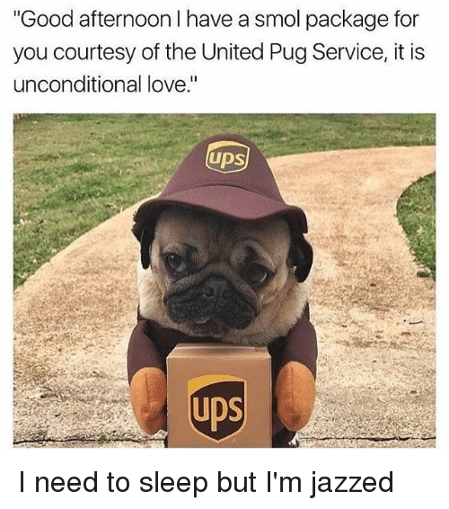 "Pugly: Good afternoon I have a smol package for  you courtesy of the United Pug Service, it is  unconditional love.""  UDS  UDS I need to sleep but I'm jazzed"
