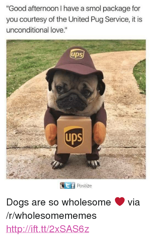 """Dogs, Love, and Ups: Good afternoon I have a smol package for  you courtesy of the United Pug Service, it is  unconditional love.""""  ups  Postize <p>Dogs are so wholesome ❤️ via /r/wholesomememes <a href=""""http://ift.tt/2xSAS6z"""">http://ift.tt/2xSAS6z</a></p>"""